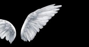 Parachat Vayakel Pékoudé – Le salaire des anges